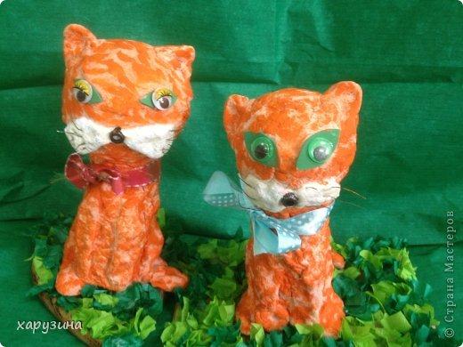 Котята-соленушки. фото 1
