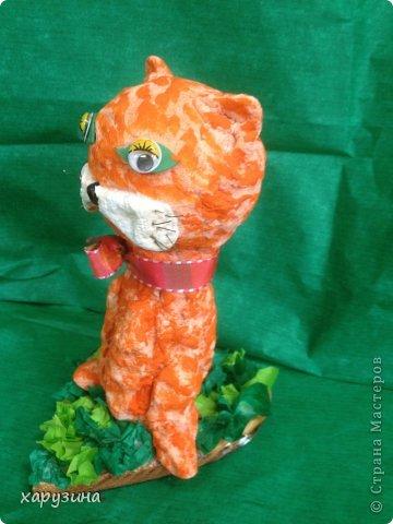 Котята-соленушки. фото 3