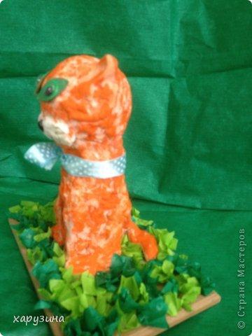 Котята-соленушки. фото 5