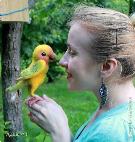 Попугай Чик фото 1