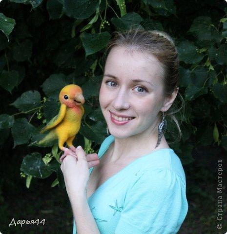 Попугай Чик фото 3