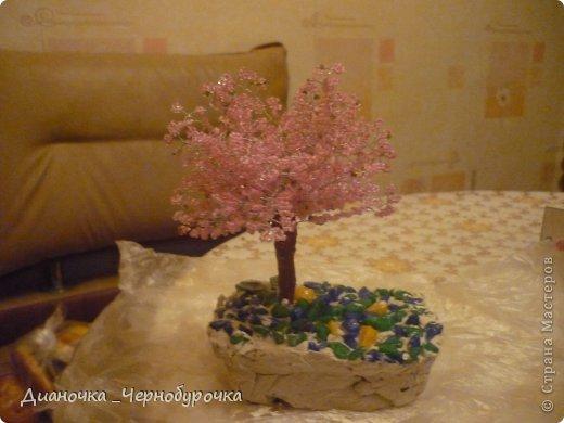 Сакура и МК к ней. фото 1