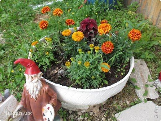 Приветик, мои дорогие! сегодня хочу познакомить вас со своими друзьями- помощниками по даче.  Это первые помощники- цветочки. Посмотришь- растут! думаешь - может и выйдет из меня дачница-сажающая-цветы... фото 1
