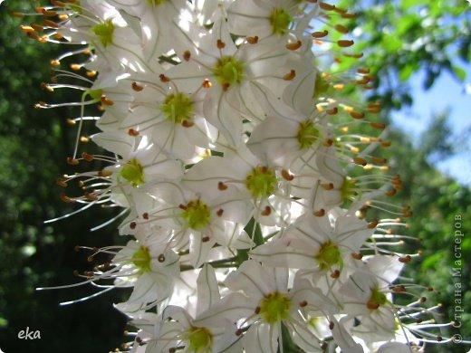 Я прилетела на летние каникулы в Узбекистан. И в начале июня мы пошли в поход в горах недалеко от Кумышкана. Шли и разговаривали, что так хотелось бы увидеть эремурусы, но только они цветут в мае. А из-за учёбы я могу прилетать в Ташкент не раньше 25 мая. Наверное, уже все эремурусы отцвели. фото 4