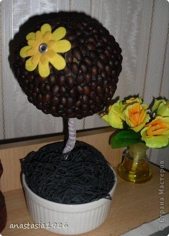 кофейное деревце  фото 2