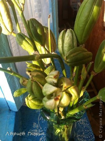 Мастер-класс Флористика Ассамбляж Цветок из плода ириса петушка Материал природный фото 6