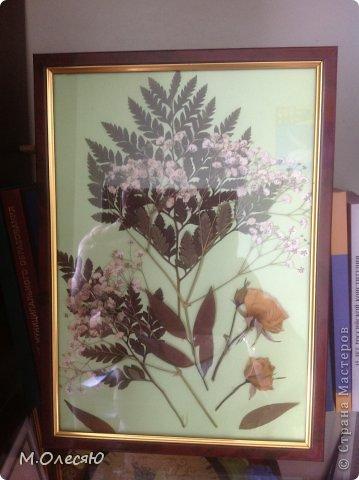 вот такое панно получилось у меня из бережно засушенных цветов после моего дня рождения! маленькое напоминание о милых букетиках. Моя любимая помощница, милая девушка, насушила цветов от подаренных мне букетов. из этого мы бвстренько соорудили вот такую картиночку. фото 1