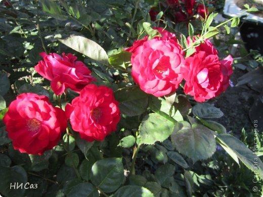 Розовое наслаждение фото 6