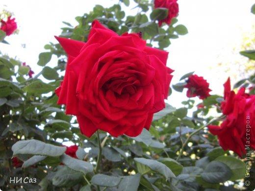 Розовое наслаждение фото 7