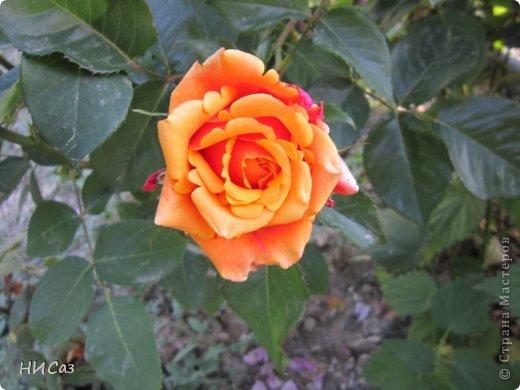 Розовое наслаждение фото 8