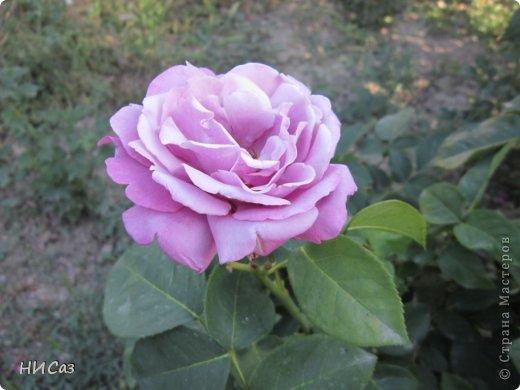 Розовое наслаждение фото 9