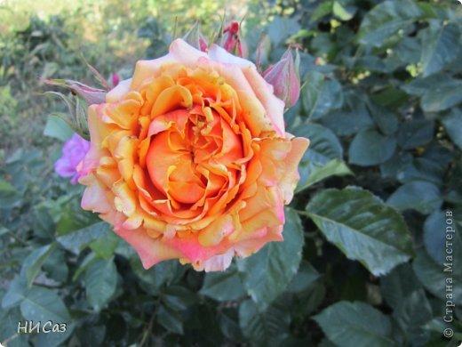 Розовое наслаждение фото 10