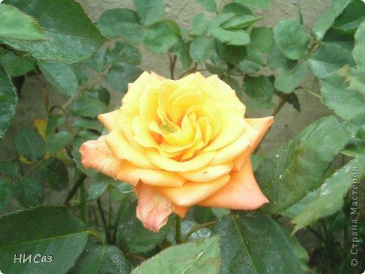 Розовое наслаждение фото 17