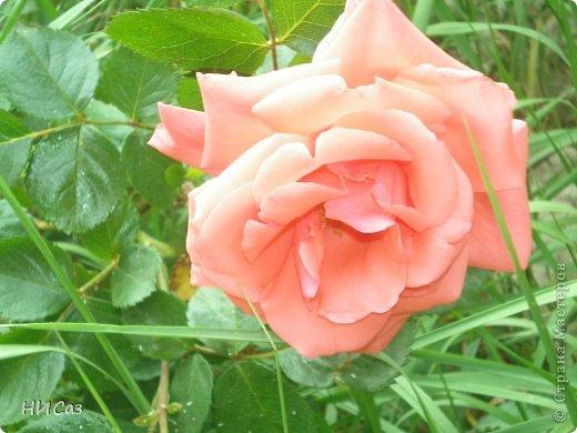 Розовое наслаждение фото 20