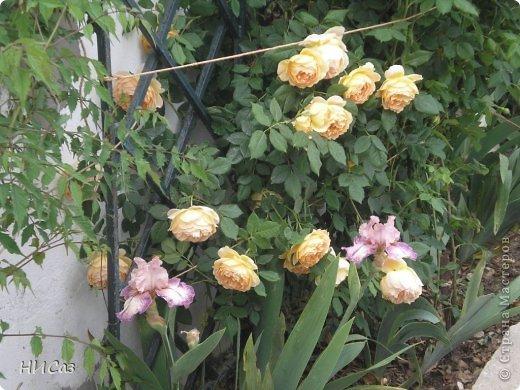Розовое наслаждение фото 33