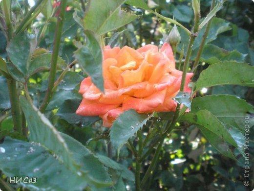 Розовое наслаждение фото 31