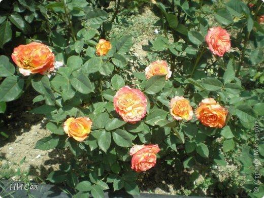 Розовое наслаждение фото 36