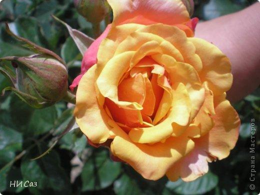 Розовое наслаждение фото 29