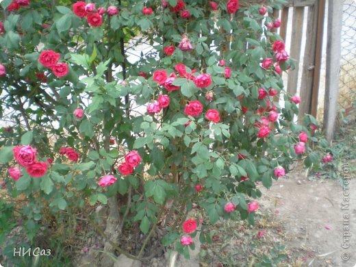 Розовое наслаждение фото 37
