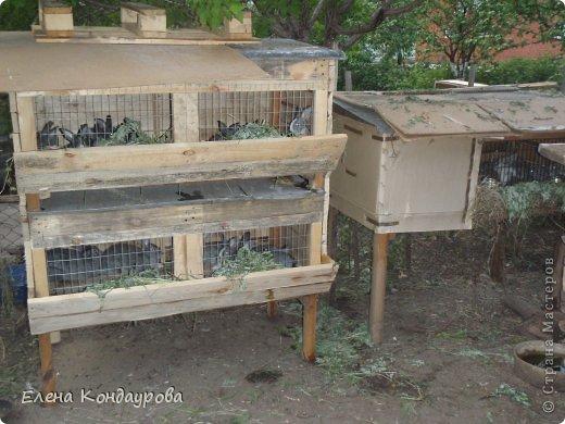 ......Доброго времени суток,всем, мои дорогие!!!! Я к вам с фотками зверющек!!! Кролики.... Многим эти пушистики в диковинку, а у меня они поселились с осени прощлого года...    Внучатам в Воронеже подарили 2 крольчонка. Все лето дети ухаживали, кормили малышей, кстати очень хорошо,когда у детей есть возможность ухаживать за животными.... Пришла осень, задождило, похолодало и мне предложили забрать их в Эртиль. Зиму перезимовали, выросли, оказались 2 девочки.... Вот теперь ...и  детки у нас!!! фото 16