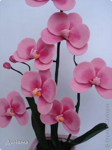 """кто-то """"подсел"""" на розы,а я на орхидеи,все пытаюсь слепить более натуральные,но получаются одинаковые,может это и есть """"почерк"""")))))) фото 4"""