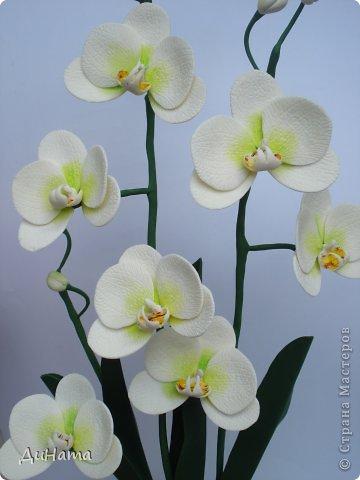 """кто-то """"подсел"""" на розы,а я на орхидеи,все пытаюсь слепить более натуральные,но получаются одинаковые,может это и есть """"почерк"""")))))) фото 2"""