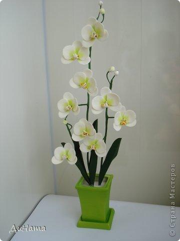 """кто-то """"подсел"""" на розы,а я на орхидеи,все пытаюсь слепить более натуральные,но получаются одинаковые,может это и есть """"почерк"""")))))) фото 1"""