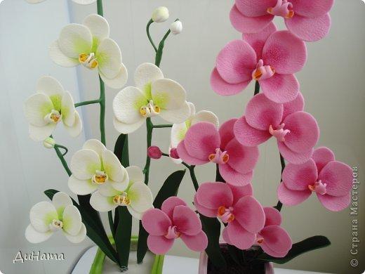 """кто-то """"подсел"""" на розы,а я на орхидеи,все пытаюсь слепить более натуральные,но получаются одинаковые,может это и есть """"почерк"""")))))) фото 6"""
