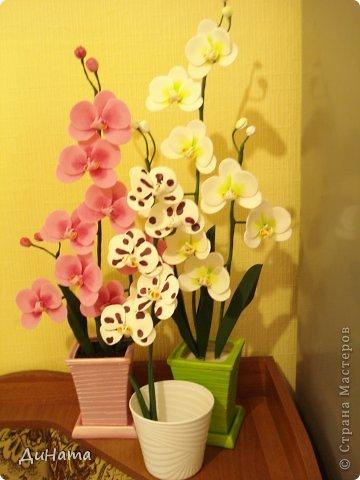 """кто-то """"подсел"""" на розы,а я на орхидеи,все пытаюсь слепить более натуральные,но получаются одинаковые,может это и есть """"почерк"""")))))) фото 9"""