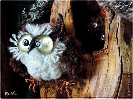 Всем привет и наилучшие пожелания!  Сегодня, как видно из заголовка, здесь сова!  Мудрейшая птица на свете - сова.  Все слышит,  Но очень скупа на слова.  Чем больше услышит -  Тем меньше болтает.  Ах, этого многим из нас  Не хватает!  (Б.Захадер)              фото 3