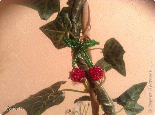 Дорогие гости выношу на Ваш суд новые фруктово-ягодные деревья. фото 5