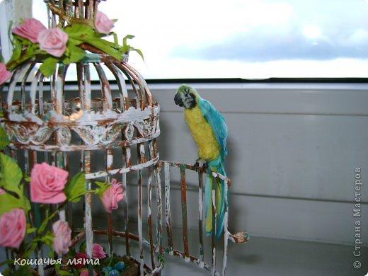 Клетка с попугаем фото 2