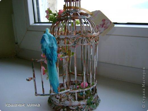 Клетка с попугаем фото 3