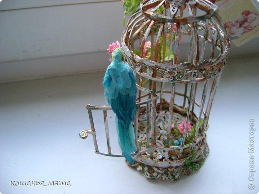 Клетка с попугаем фото 4