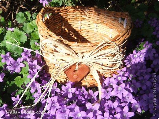 Привет дорогие жители любимой Страны  и гости моей страницы !!! Опять я с плетёнками- в первый раз плела крашенными трубочками- а красила тем, что нашла дома, краска для наружных  деревянный поверхностей ( красили забор)...вроде-бы получилось... фото 6