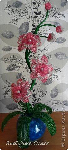 Вот такая получилась у меня первая орхидейка. Увидела я её у mari-m26 спасибо ей большое за МК https://stranamasterov.ru/node/340139 . Ну а как получилось у меня судить вам. фото 1