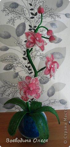 Вот такая получилась у меня первая орхидейка. Увидела я её у mari-m26 спасибо ей большое за МК https://stranamasterov.ru/node/340139 . Ну а как получилось у меня судить вам. фото 2