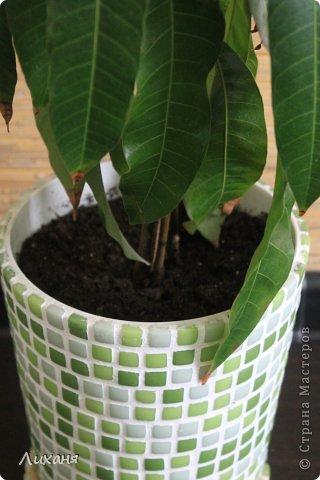 т.к. манго растение для наших квартир не обычное - значит и кашпо захотелось не обычное ))) и вот он - результат!!!! фото 2