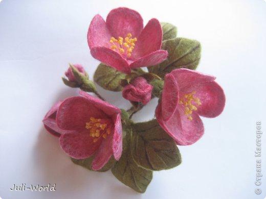 Мак, анимон, роза, яблоневый цвет. фото 12