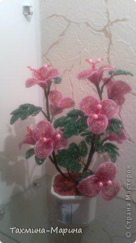 мои первые цветы