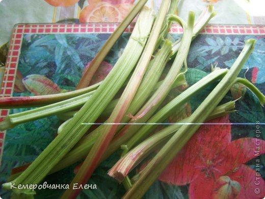 Лето в самом разгаре,но у нас в Сибири ягоды еще не поспели,в изобилиии только щавель да ревень фото 3