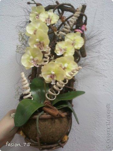 """очередная """"орхидейка"""""""
