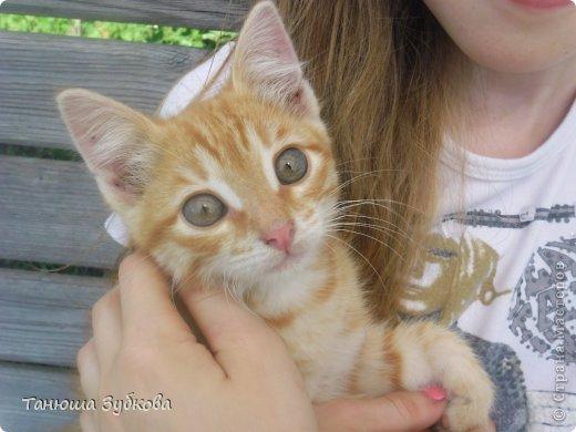 Это мой котёнок Кузя (в честь домовёнка) это он со мной . Он слегка испугался фотика )) фото 1