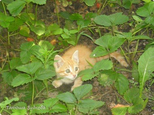 Это мой котёнок Кузя (в честь домовёнка) это он со мной . Он слегка испугался фотика )) фото 5