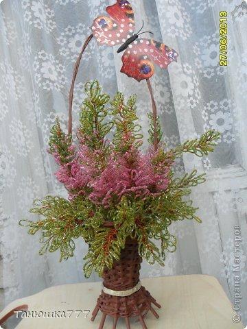 Цветущий вереск. фото 1