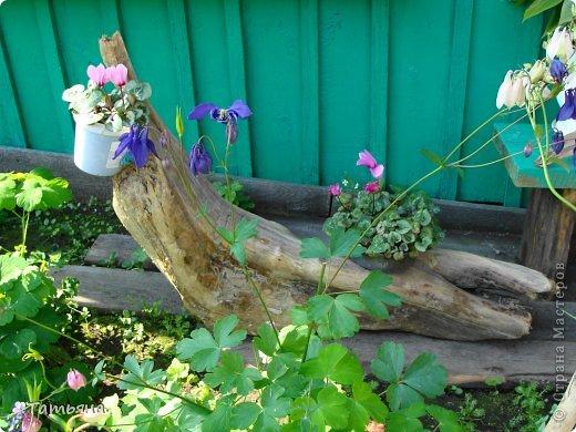 А у нас во дворе..или милости просим! фото 8