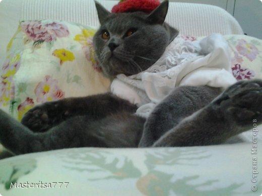 Фото моего коти Томаса. фото 2