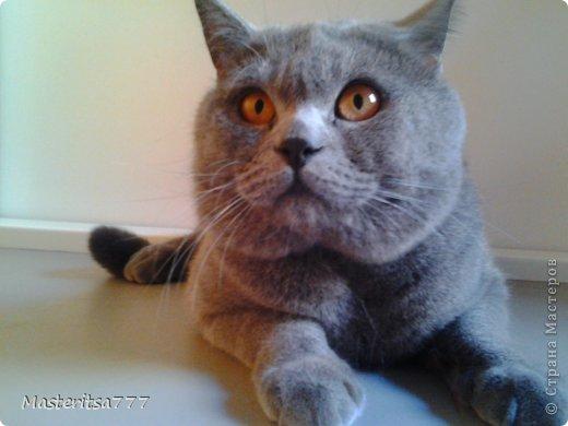 Фото моего коти Томаса. фото 3