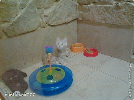 Фото моего коти Томаса. фото 5