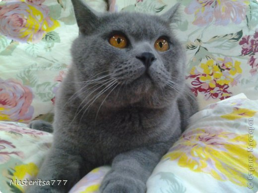 Фото моего коти Томаса. фото 4